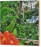 003 Falling Waters Buffalo Botanical Gardens Series Wood Print