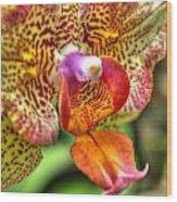 004 Orchid Summer Show Buffalo Botanical Gardens Series Wood Print