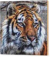 004 Siberian Tiger Wood Print