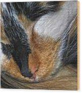 0053 Sleeping Cleo Wood Print