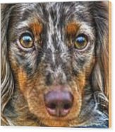 0054 Puppy Dog Eyes Wood Print