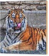 006 Siberian Tiger Wood Print