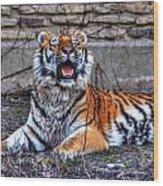 007 Siberian Tiger Wood Print