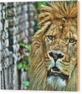 008 Lazy Boy At The Buffalo Zoo Wood Print