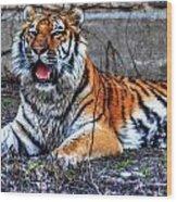 008 Siberian Tiger Wood Print