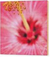 00a Buffalo Botanical Gardens Series Wood Print