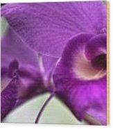 00c Buffalo Botanical Gardens Series Wood Print