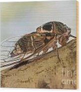 01 New Forest Cicada  Wood Print