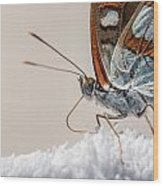 01 Southern White Admiral Butterfly Close Up Wood Print