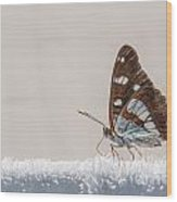 01 Southern White Admiral Butterfly Wood Print