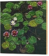 0151-lily - Color Drawing Sl Wood Print