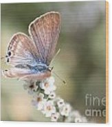 02 Long-tailed Blue Butterfly Wood Print