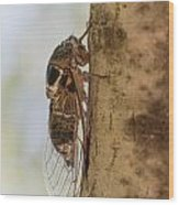 02 New Forest Cicada  Wood Print
