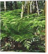 029ferntreesg Wood Print
