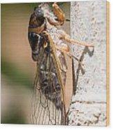 03 New Forest Cicada  Wood Print