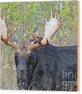 0341 Bull Moose Wood Print