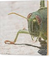 04 Egyptian Locust Grasshopper Wood Print