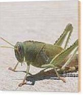 05 Egyptian Locust Grasshopper Wood Print