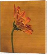 055 Wood Print