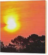 0601 Sunrise Over Silhouette Trees Wood Print