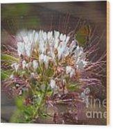 08.03.14 Palo Duro Canyon - Comanche Trail 117e Wood Print