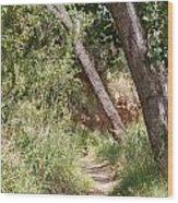 08.03.14 Palo Duro Canyon Rojo Grande Trail 8e Wood Print