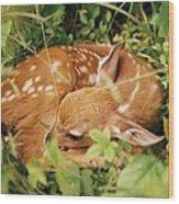 080806-17 Wood Print
