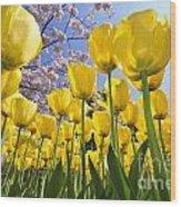 090416p030 Wood Print