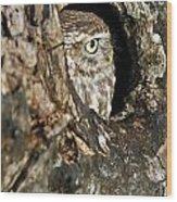 090811p325 Wood Print