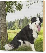 Border Collie In The Nature Wood Print