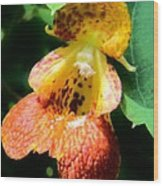 Spotted Jewelweed Wood Print