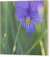 01 Heart's Ease Wild Viola Wood Print