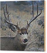 4x4 Mule Deer Buck   #7714 Wood Print