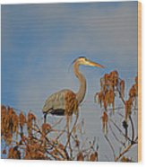 7- Great Blue Heron Wood Print