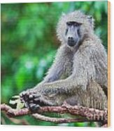 A Baboon In African Bush Wood Print