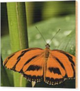 A Banded Orange Heliconian Butterfly Wood Print