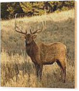 A Bull Elk In Rut Wood Print