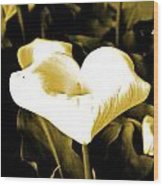 A Flower In The Shadows Wood Print
