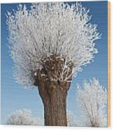 A Frosted Willow On A Very Cold And Bright Winter Day Wood Print