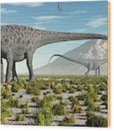 A Herd Of Diplodocus Sauropod Dinosaurs Wood Print