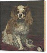 A King Charles Spaniel Wood Print