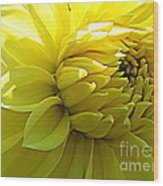 Golden Dahlia Wood Print