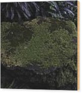 A Moss Covered Stone Inside The National Orchid Garden In Singapore Wood Print