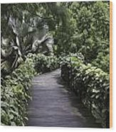 A Raised Walking Path Inside The National Orchid Garden In Singapore Wood Print