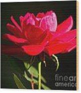 A Red Rose Wood Print