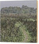 A Small Path Through Very Tall Grass Inside The Okhla Bird Sanctuary Wood Print