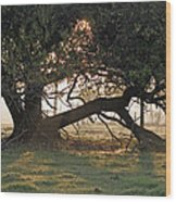 A Tree In Mississippi Wood Print