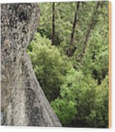 A Young Boy Climbs In Yosemite, June Wood Print
