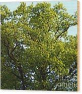 Aaru Wood Print