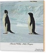 Adelie Penguins Wood Print by David Barringhaus